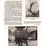 la revue moderne des arts et de la vie 1976